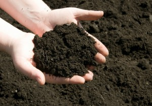 Researchers-Are-Looking-for-New-Anticancer-Drugs-in-Dirt-No-Joke-470735-2